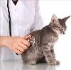 Ветеринарные клиники в Чудово